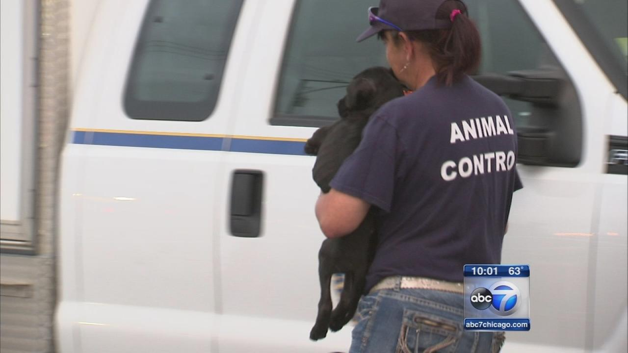 Charges filed against Dolton Animal Hospital veterinarian and manager