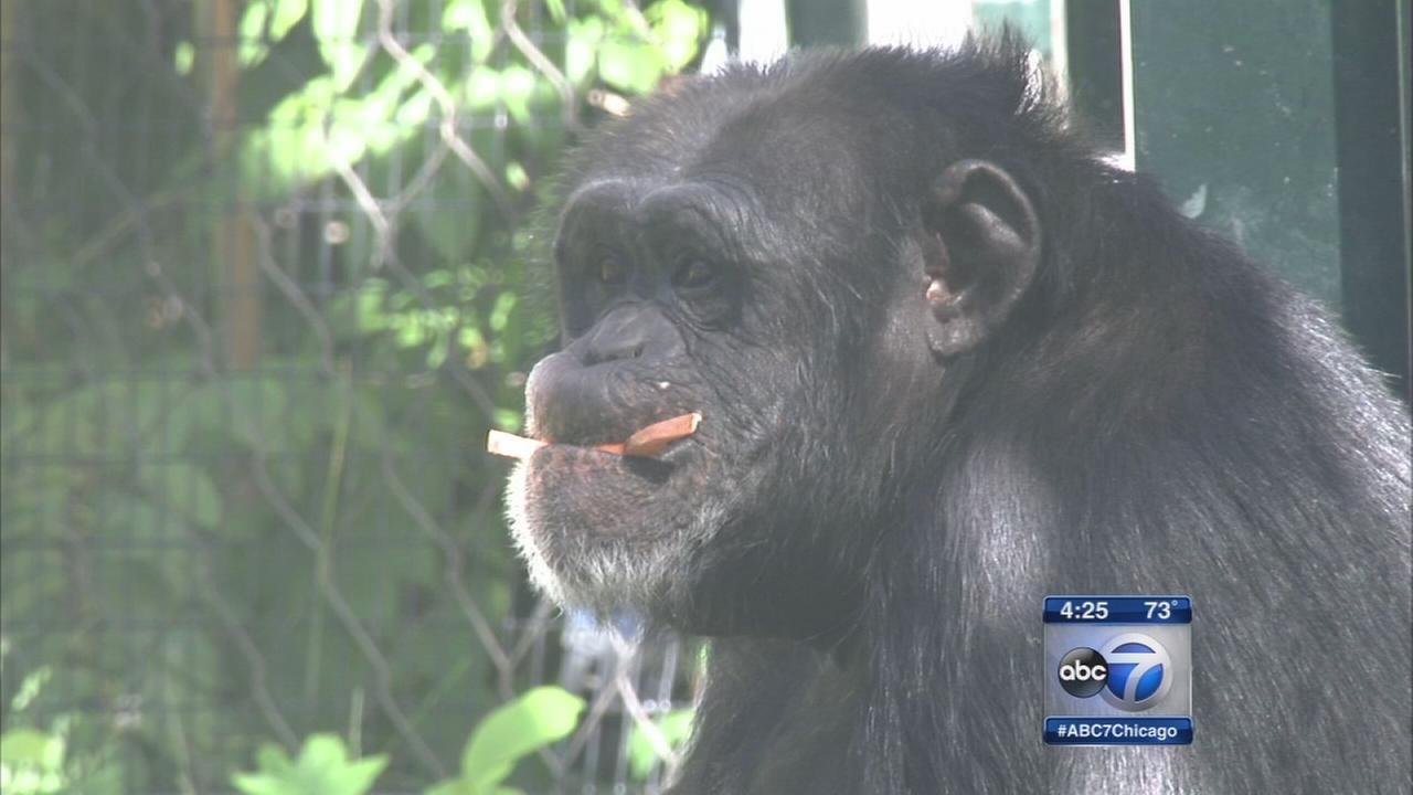 Research links territorial behavior in chimpanzees, humans