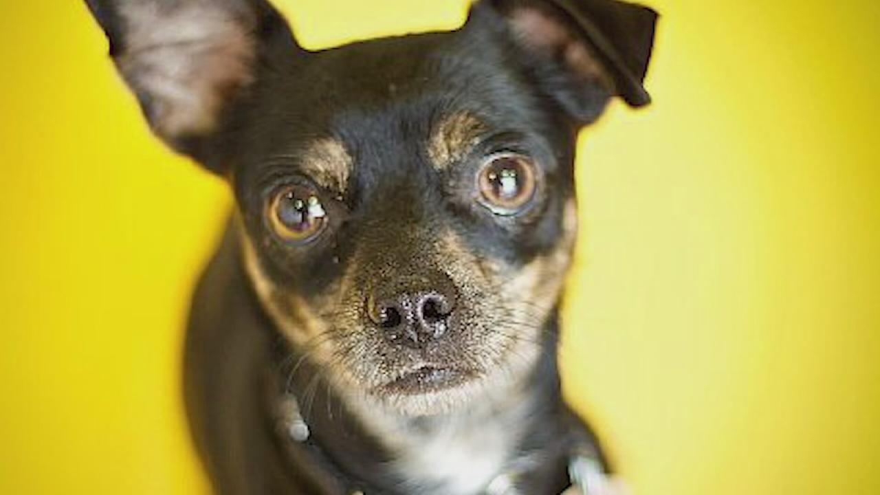 Adoptable adult pets at PAWS Chicago