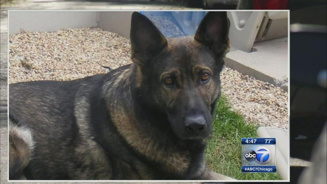 Police dog attacked by 2 pit bulls in Clearing