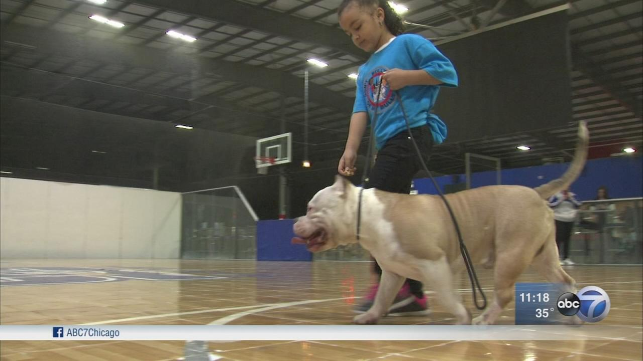 Progam brings kids and bully dogs together