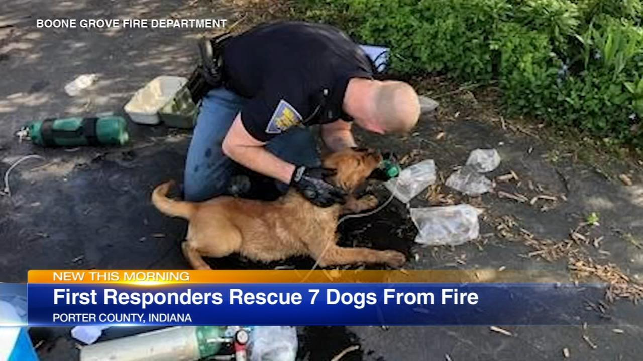 7 dogs, 2 of them pregnant, rescued from Indiana fire