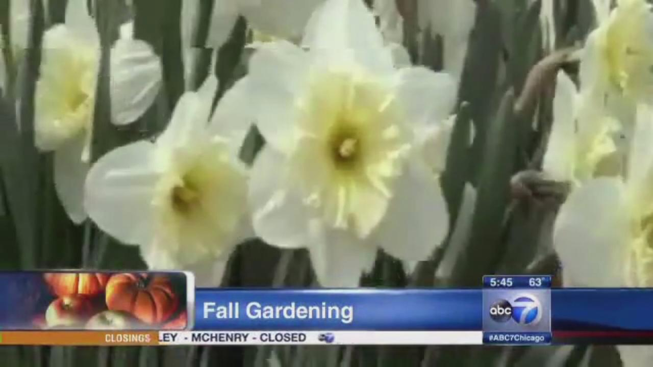 Top 5 things to do in fall for your garden