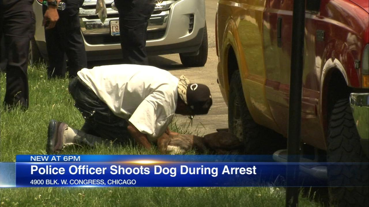Chicago police officer shoots dog after getting bit while making an arrest