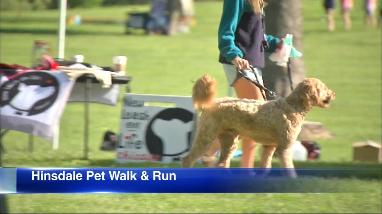 Hinsdale Humane Society holds 2018 Pet Walk and Run