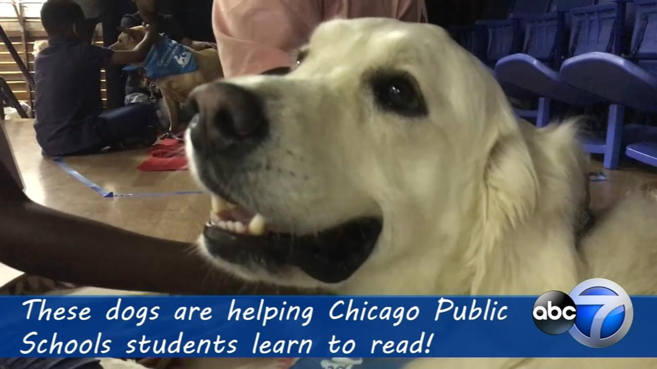 Meet the dogs who help CPS students learn to read