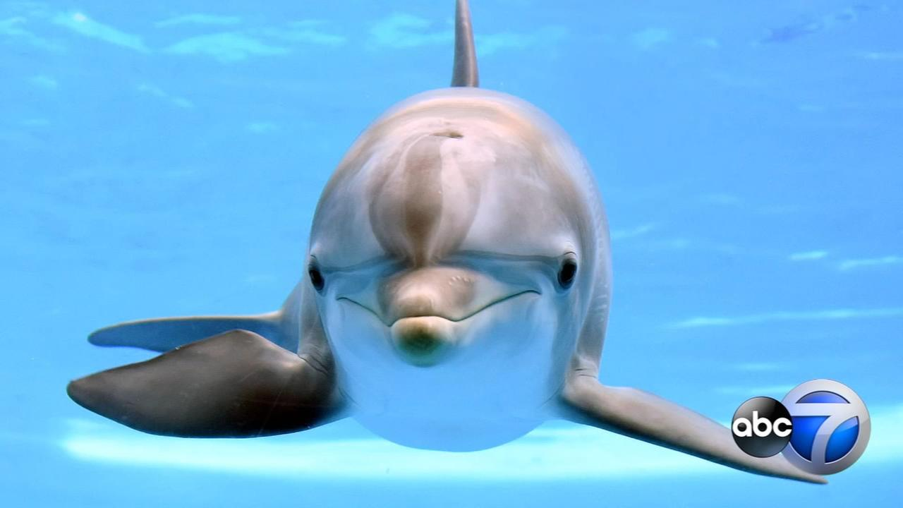 Brookfield Zoo mourns sudden loss of young dolphin