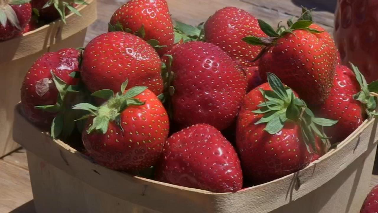 Strawberries are in season in northwest Indiana