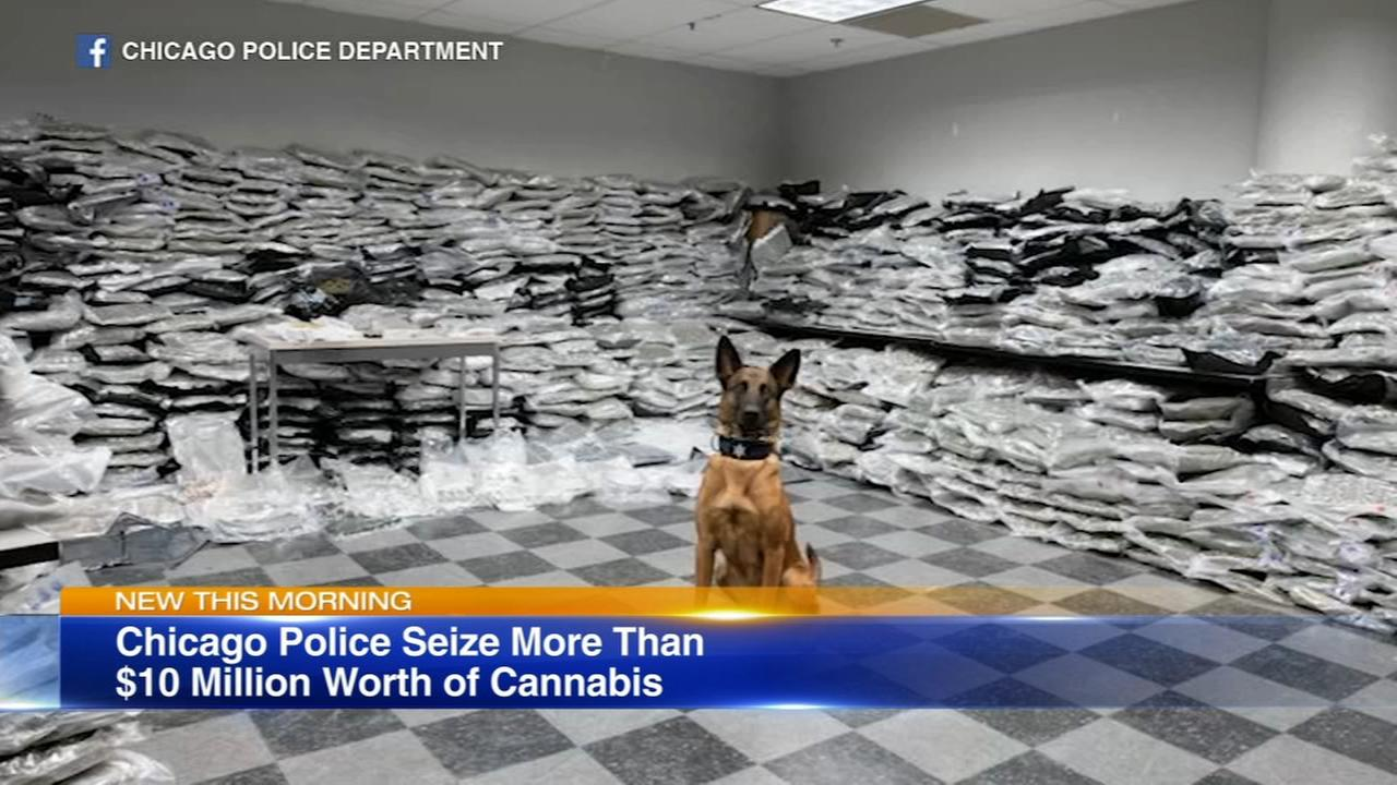 CPD police dog helps find marijuana worth $10M