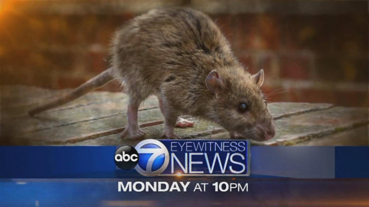 I-Team: Rat Problems