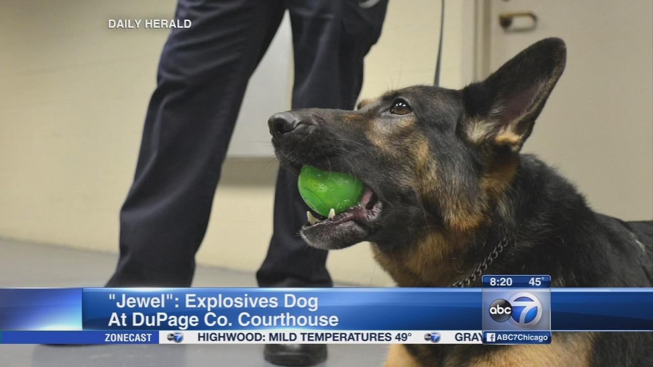 Daily Herald: The life of a courthouse canine