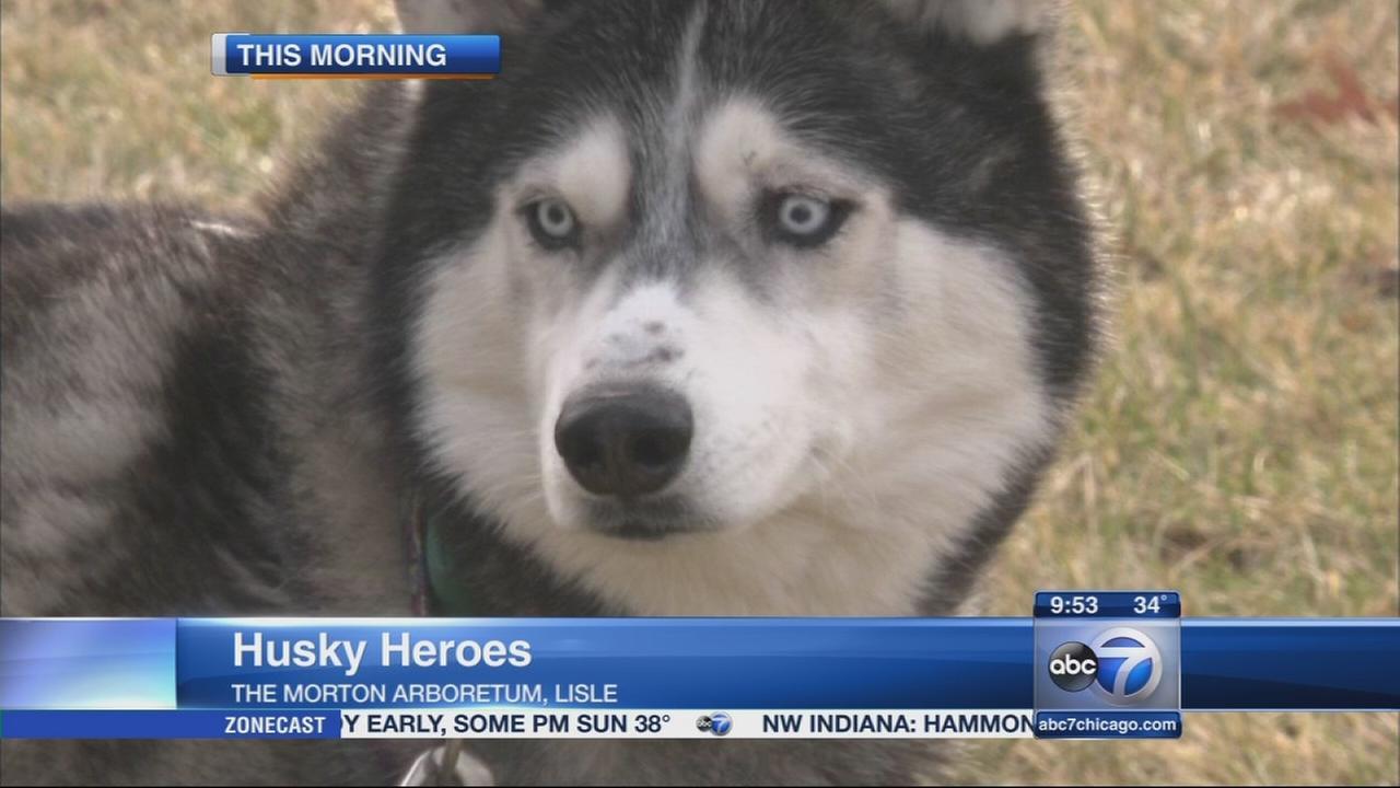 Morton Arboretum hosts Husky Heroes