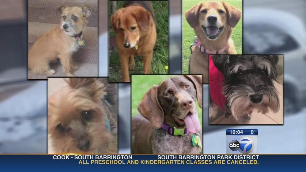 Van carrying pets stolen