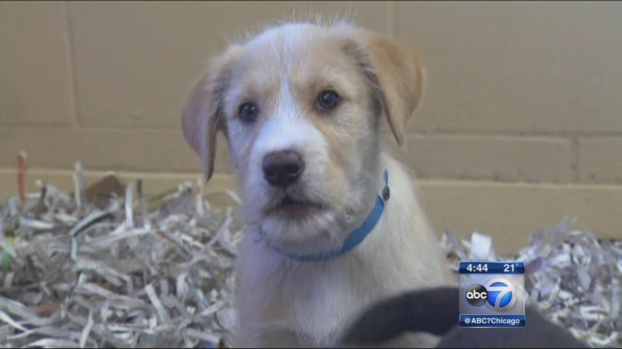 Lawsuit postpones Chicago pet shop ordinance