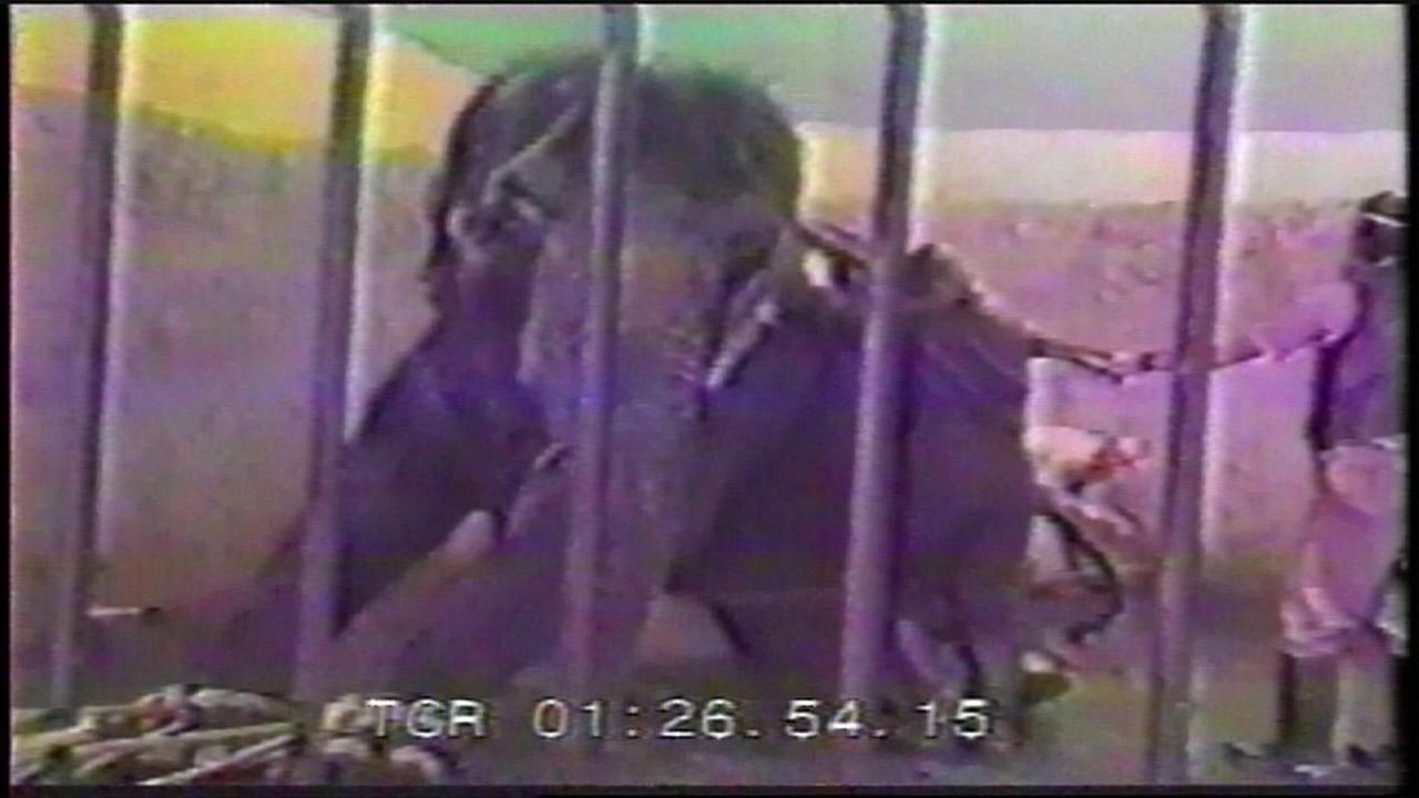 Tamed or Tortured: Part 2