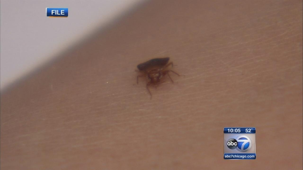 Lambs Farm battling bed bug infestation