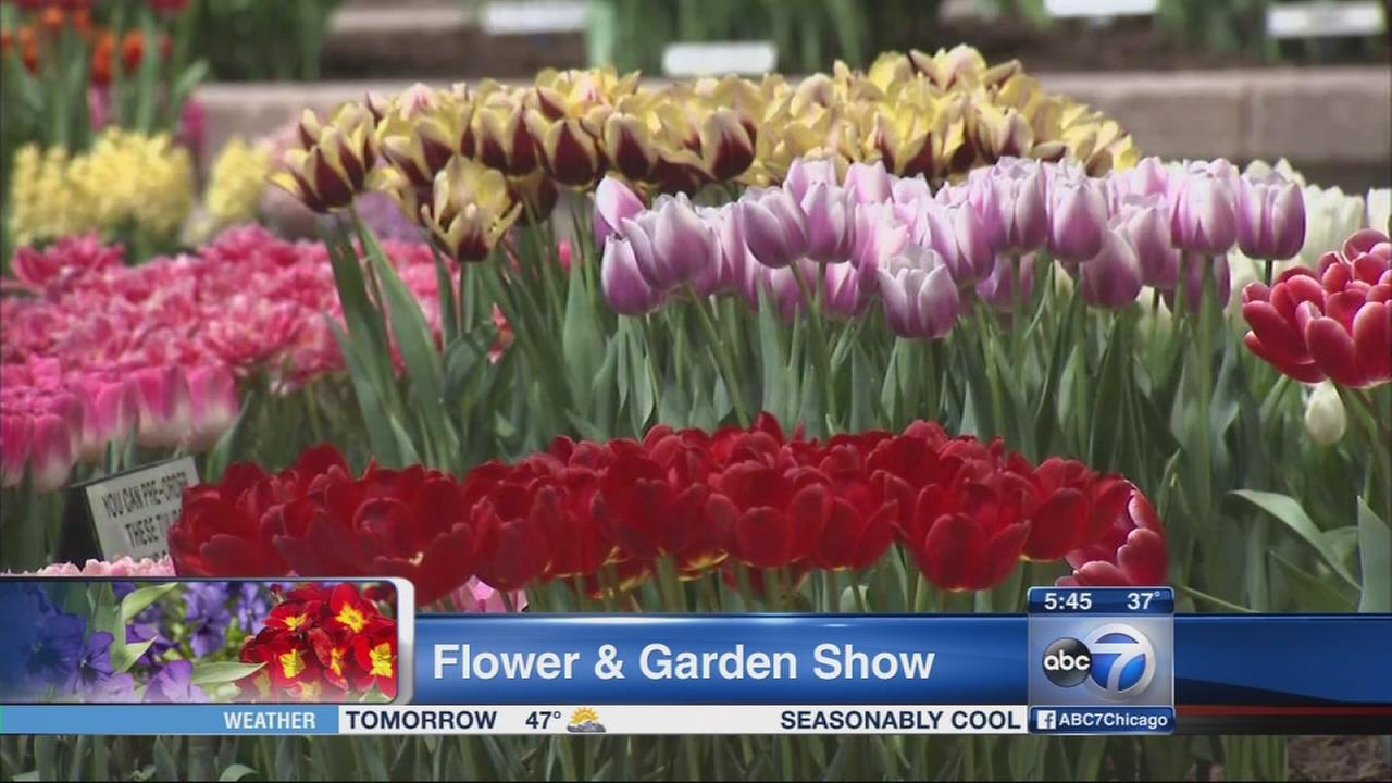 Chicago Flower Show