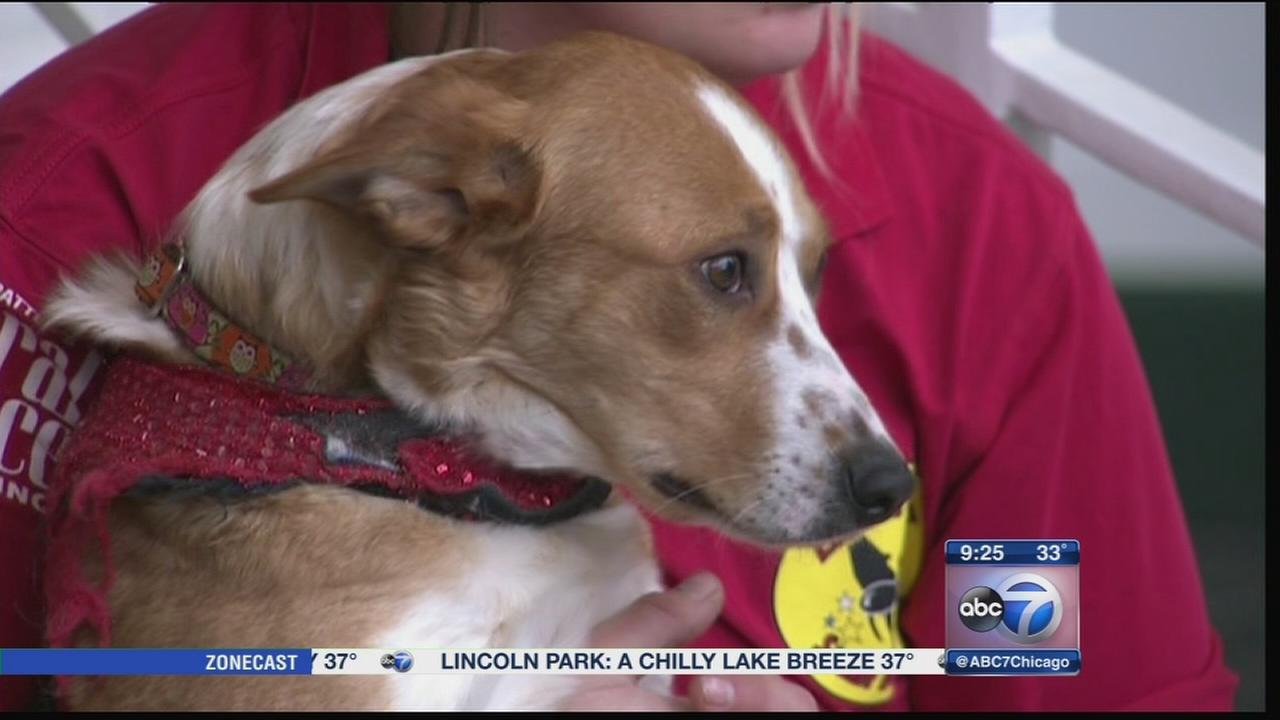 Chicagoland Family Pet Expo helps animals in need