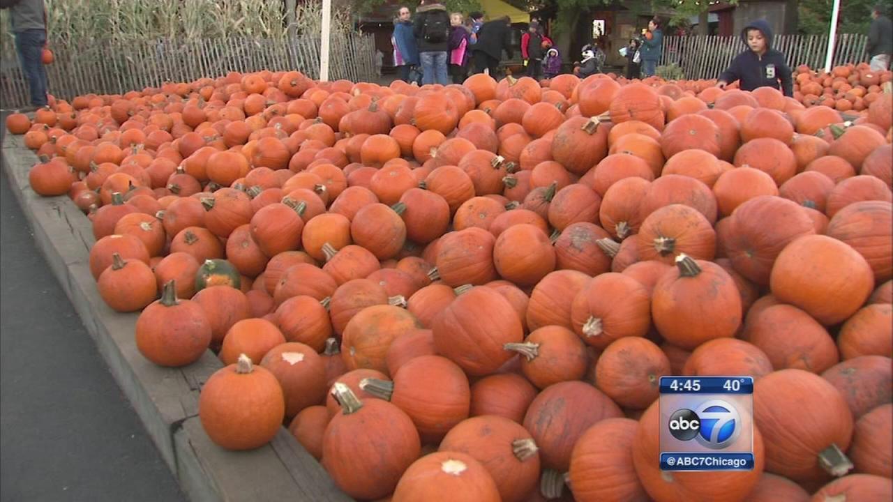 Pumpkin patch at center of Homer Glen mayoral race