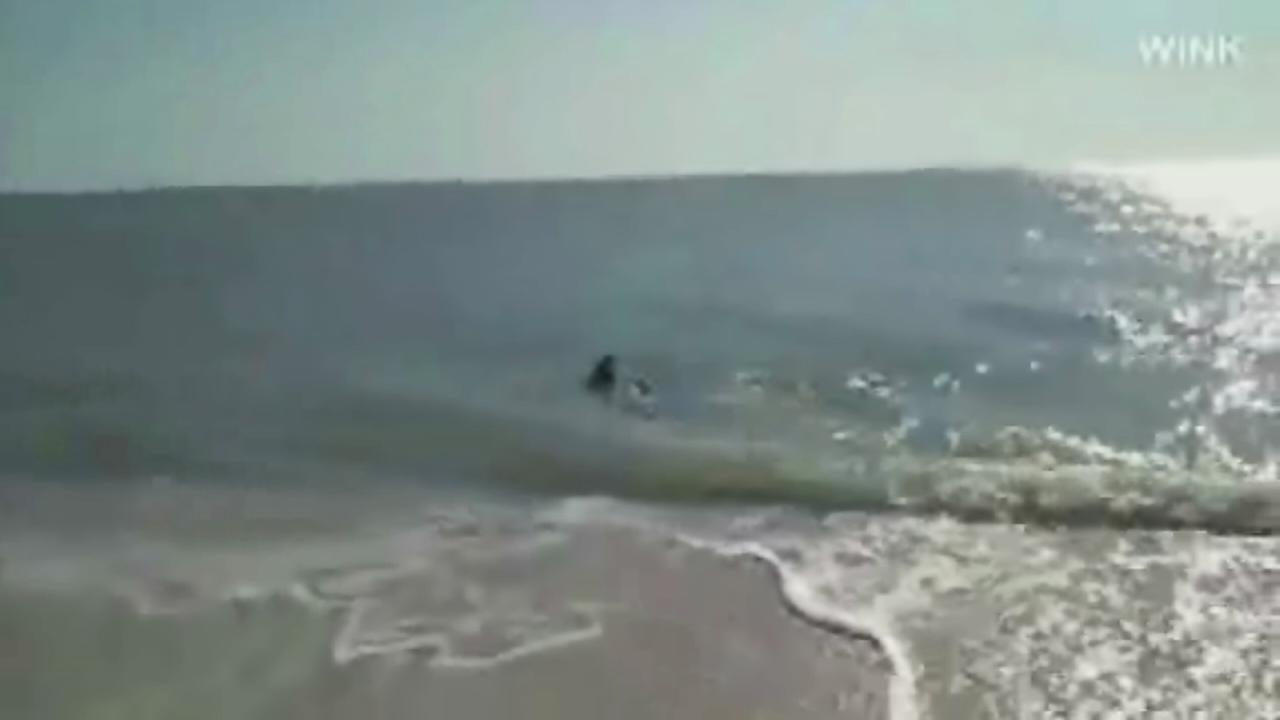 Shark spotted in knee-deep Fla. beach waters