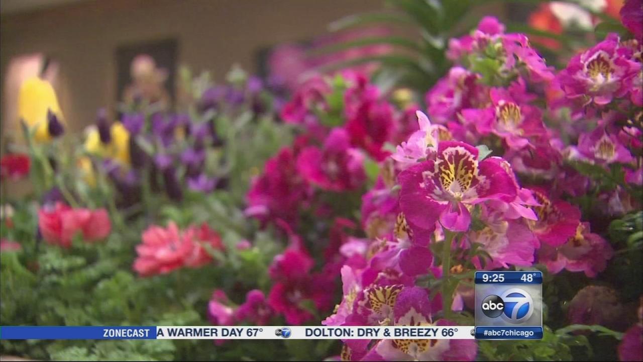 Easter at the Chicago Botanic Garden