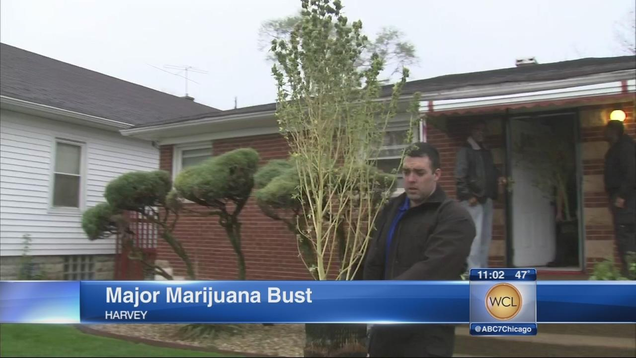 Harvey pot bust