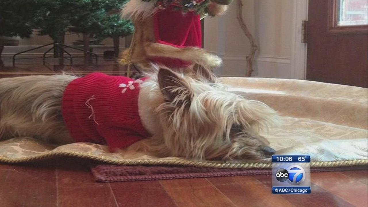Family questions if dog died because of jerky treats