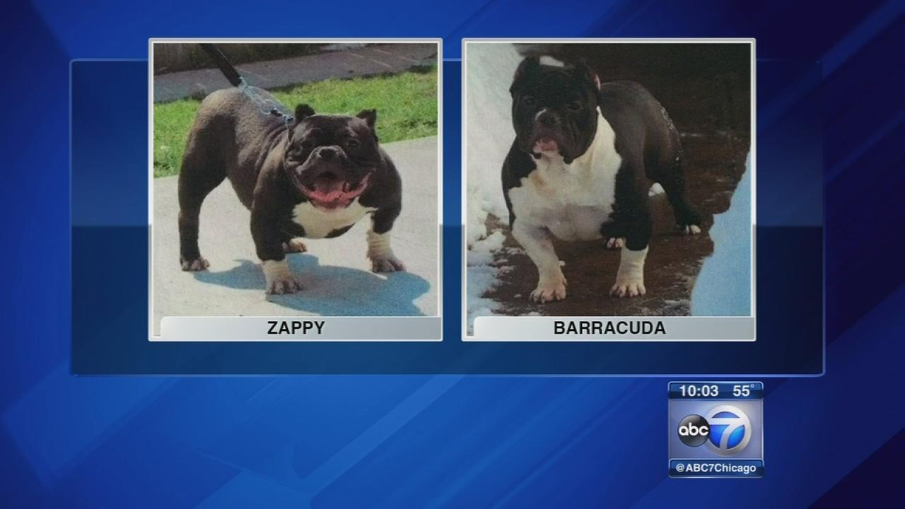 Three dogs stolen at gunpoint in Logan Square