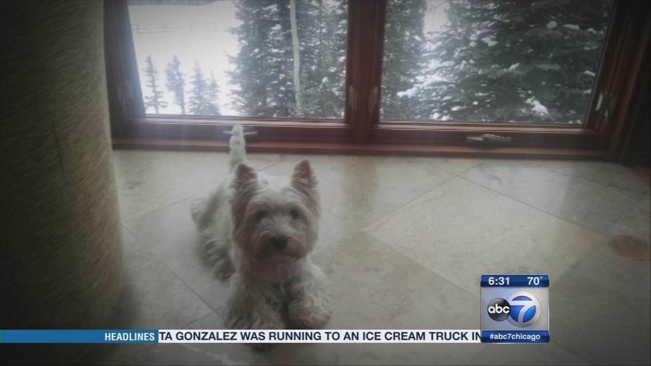 Reward offered for safe return of stolen dog, owner says