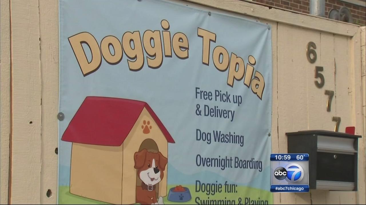 Edison Park residents fed up with noisey doggie daycare