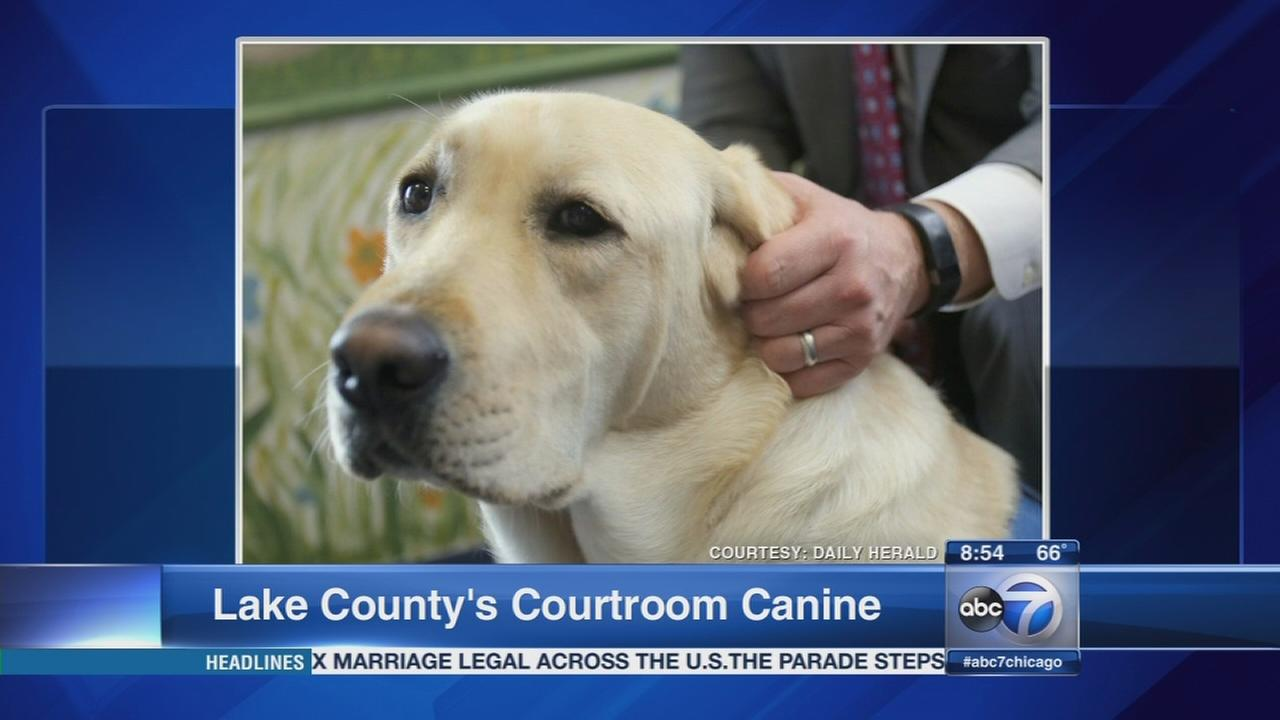 Daily Herald: Lake Countys court service dog