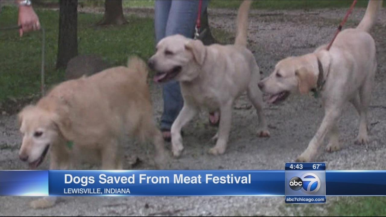 Dogs saved from meat festival