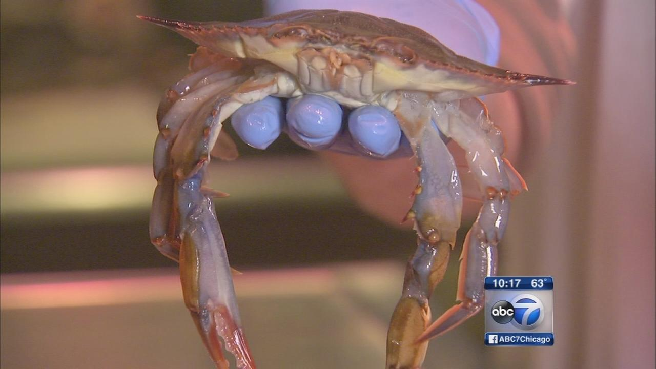 Softshell crabs a star at Eatalys fish counter