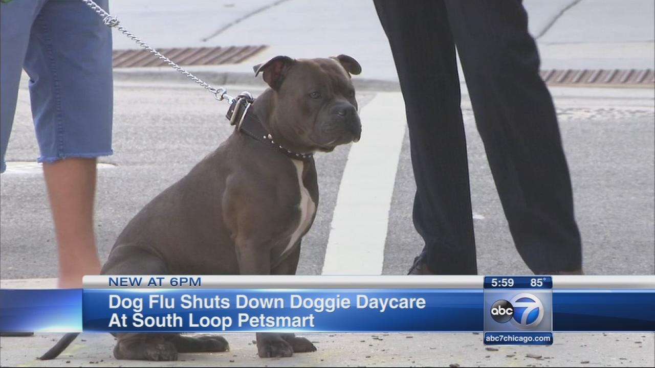 PetSmart South Loop confirms one case of dog flu