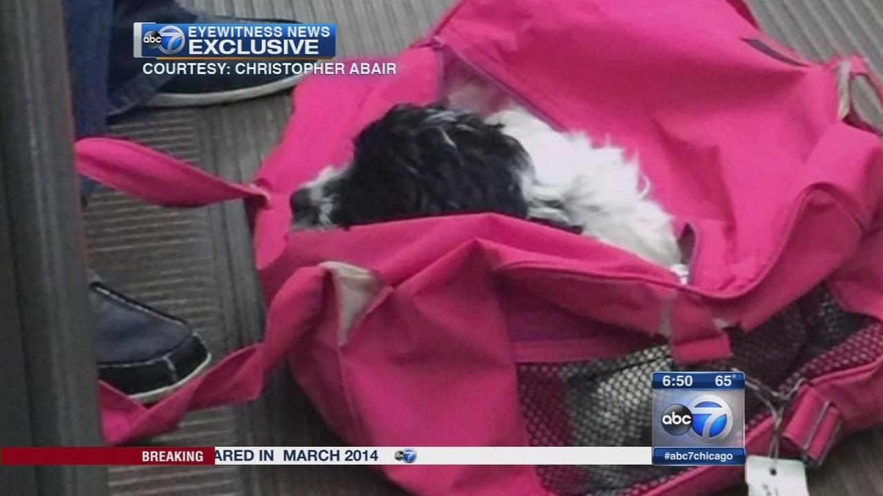 Puppy stolen at knifepoint on CTA train, police say