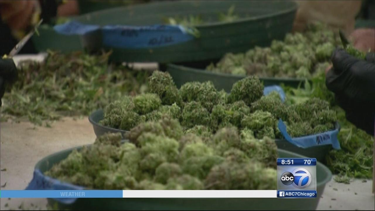 Medical marijuana industry growing in IL