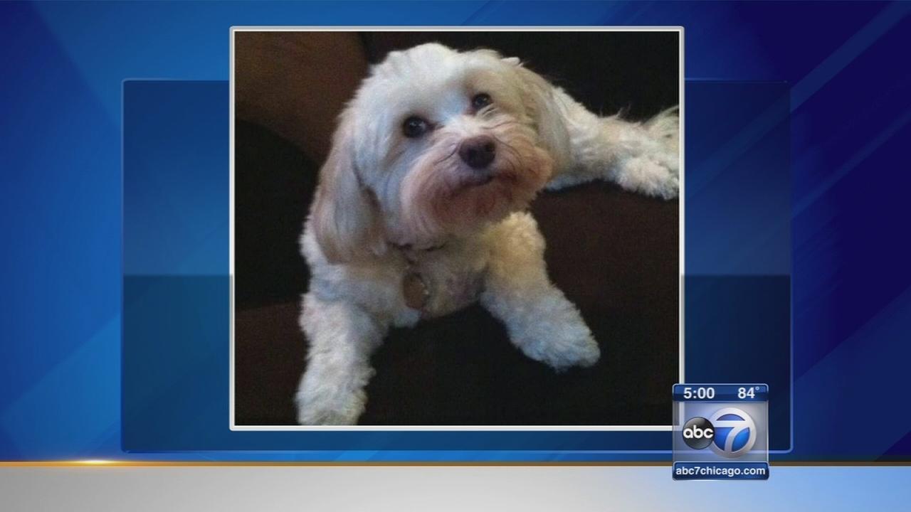Dogs death blamed on Hambone treat