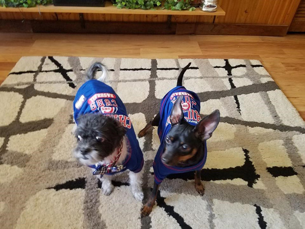 "<div class=""meta image-caption""><div class=""origin-logo origin-image none""><span>none</span></div><span class=""caption-text"">Our ABC 7 Chicago Facebook fans shared photos of their furry friends with us for National Puppy Day!</span></div>"