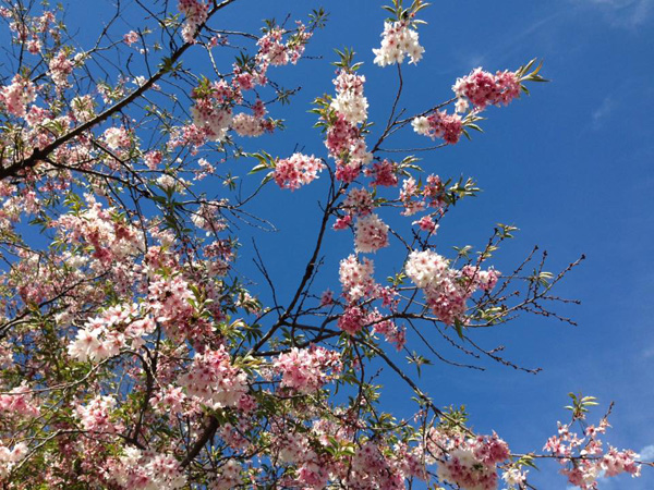 "<div class=""meta image-caption""><div class=""origin-logo origin-image none""><span>none</span></div><span class=""caption-text"">Spring in Chicago is in full bloom! Enjoy these beautiful flowers shared with us by ABC7 graphic designer Renee Bajek.</span></div>"