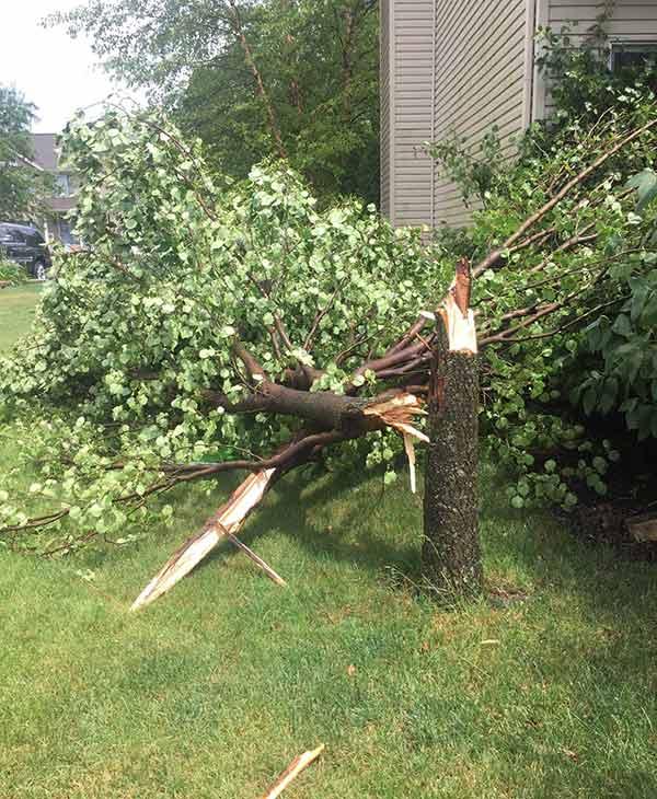 <div class='meta'><div class='origin-logo' data-origin='none'></div><span class='caption-text' data-credit='Alexandria in Shorewood'>Storm damage in Shorewood, Ill.</span></div>