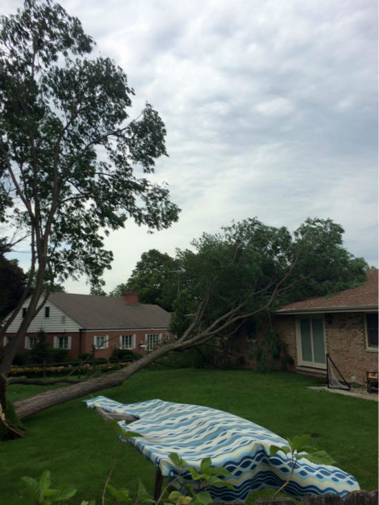 <div class='meta'><div class='origin-logo' data-origin='none'></div><span class='caption-text' data-credit='WLS Photo'>Tree falls on home in Joliet, Ill. Shared by Philip Gray.</span></div>