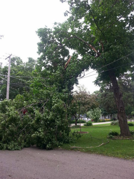 <div class='meta'><div class='origin-logo' data-origin='none'></div><span class='caption-text' data-credit='WLS Photo'>Tree falls on power lines in Yorkville, Ill. Shared by Michelle Palleson.</span></div>