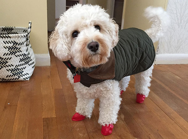 "<div class=""meta image-caption""><div class=""origin-logo origin-image none""><span>none</span></div><span class=""caption-text"">Brody is ready in his coat and boots.  (Action News Viewer )</span></div>"