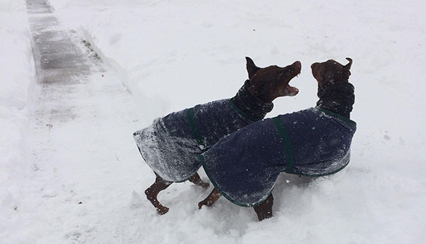 "<div class=""meta image-caption""><div class=""origin-logo origin-image none""><span>none</span></div><span class=""caption-text"">One of these dogs may be more excited than the other about the snow.  (Action News Viewer )</span></div>"
