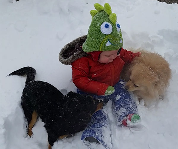 """<div class=""""meta image-caption""""><div class=""""origin-logo origin-image none""""><span>none</span></div><span class=""""caption-text"""">This little one is enjoying the snow with his favorite pups.  (Brittanee )</span></div>"""