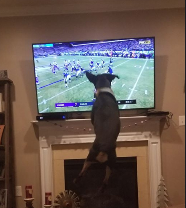 "<div class=""meta image-caption""><div class=""origin-logo origin-image wpvi""><span>WPVI</span></div><span class=""caption-text"">Could you please post the picture of our Rottweiler, Riggs? He was literally jumping with excitement watching the game on Sunday night! - From chrissy.holtmarino on Facebook.</span></div>"
