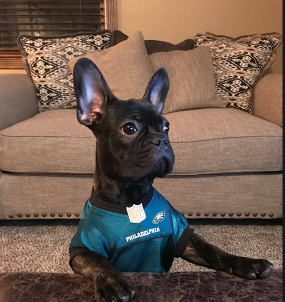 "<div class=""meta image-caption""><div class=""origin-logo origin-image wpvi""><span>WPVI</span></div><span class=""caption-text"">Kong the French Bulldog from Hammonton really gets into watching the game! EAGLES - From christinescola79 on Facebook.</span></div>"