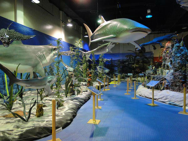 Photos Dinosaurs Of The Deep Invade Adventure Aquarium