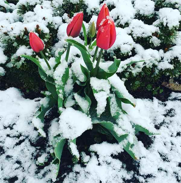 "<div class=""meta image-caption""><div class=""origin-logo origin-image none""><span>none</span></div><span class=""caption-text"">Happy spring from Chester County. (Elyse Altiere)</span></div>"