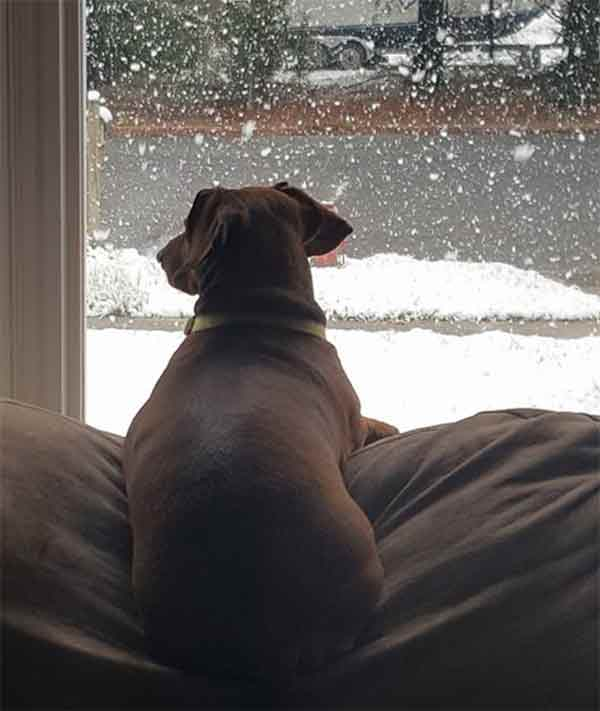"<div class=""meta image-caption""><div class=""origin-logo origin-image none""><span>none</span></div><span class=""caption-text"">Odie the dog enjoys the snowy view from the couch in Newfield, New Jersey. (Dineh Stephens Perry)</span></div>"